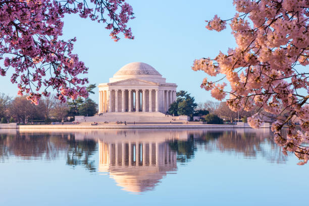 beautiful early morning jefferson memorial with cherry blossoms - monumento foto e immagini stock