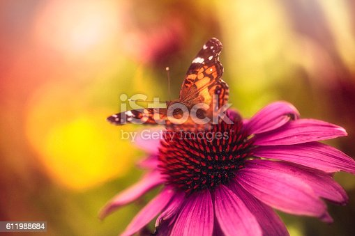 Beautiful echinacea coneflower with butterfly and bokeh