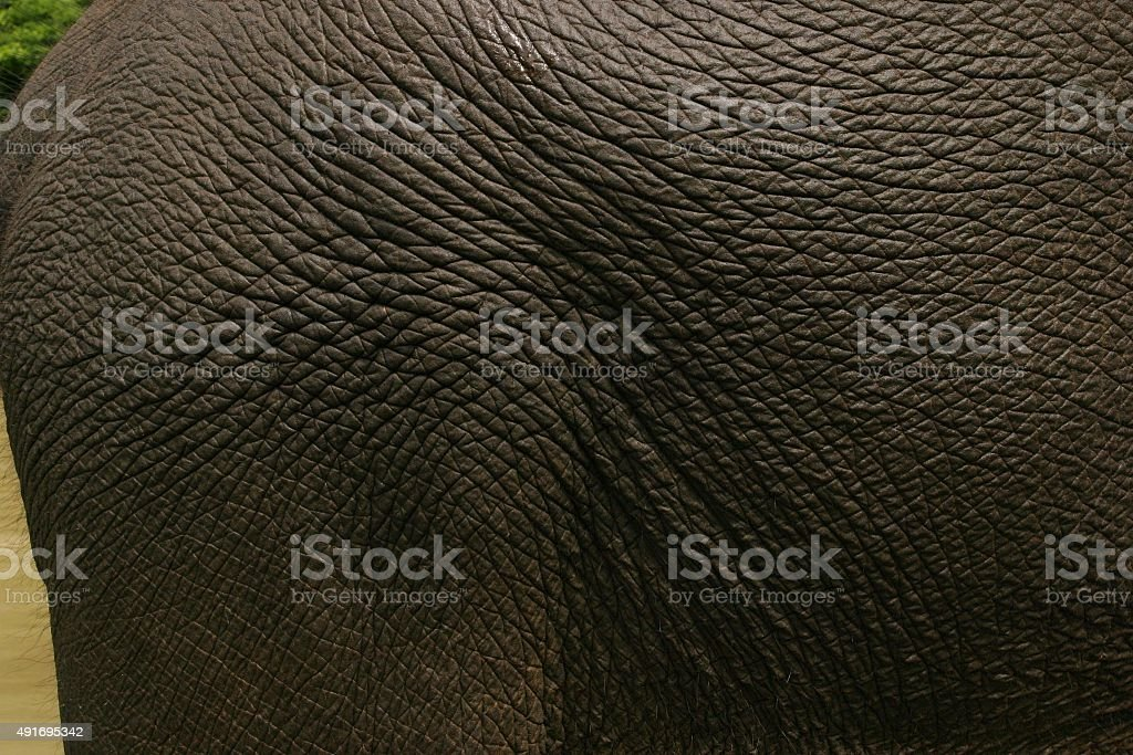 Wunderschöne elephant Haut – Foto