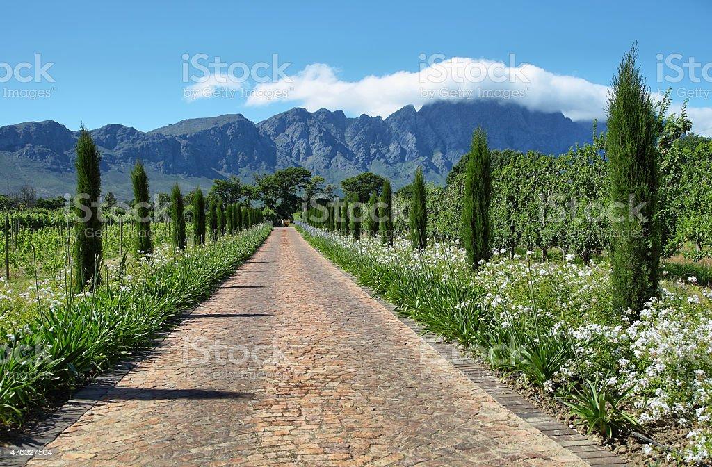 Beautiful entrance of winery estate area stock photo
