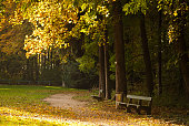 Beautiful yellow leaves in a lonesome european park.