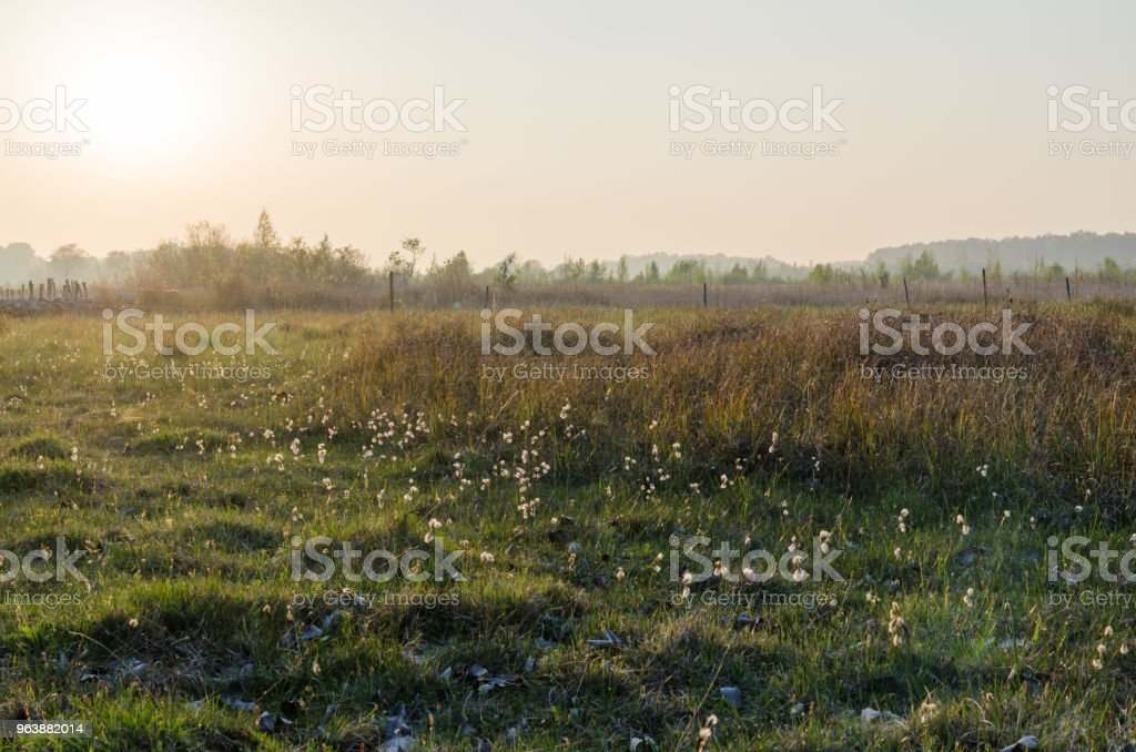 Beautiful evening by a marshland - Royalty-free Agricultural Field Stock Photo