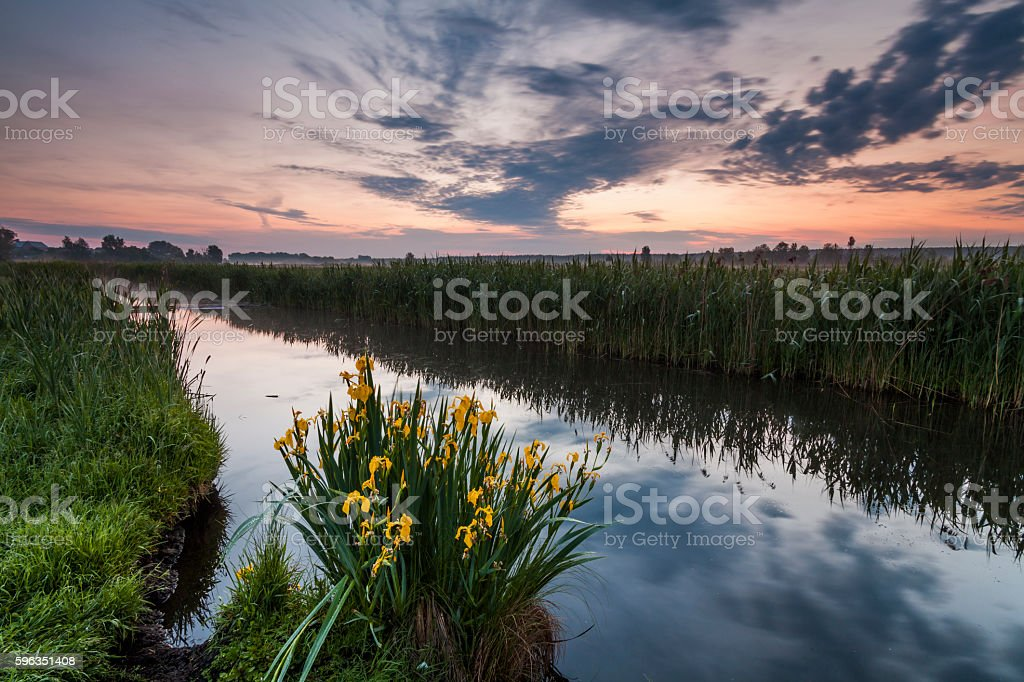 Beautiful evening landscape with the river and flowers. Lizenzfreies stock-foto