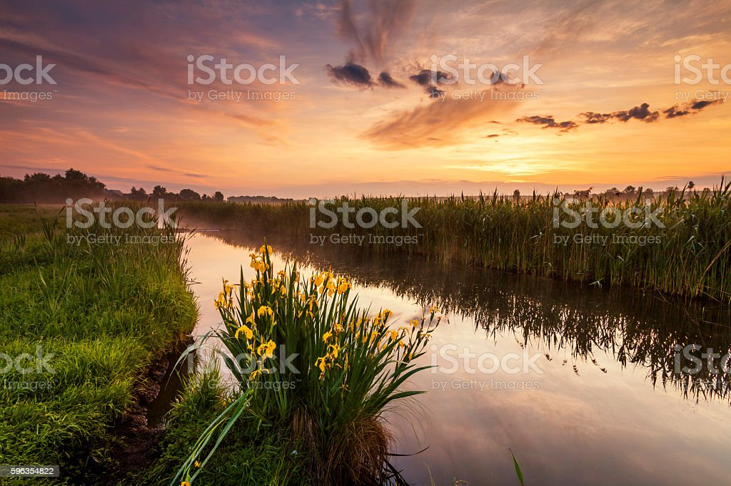 Beautiful evening landscape with the river and flowers. royalty-free stock photo