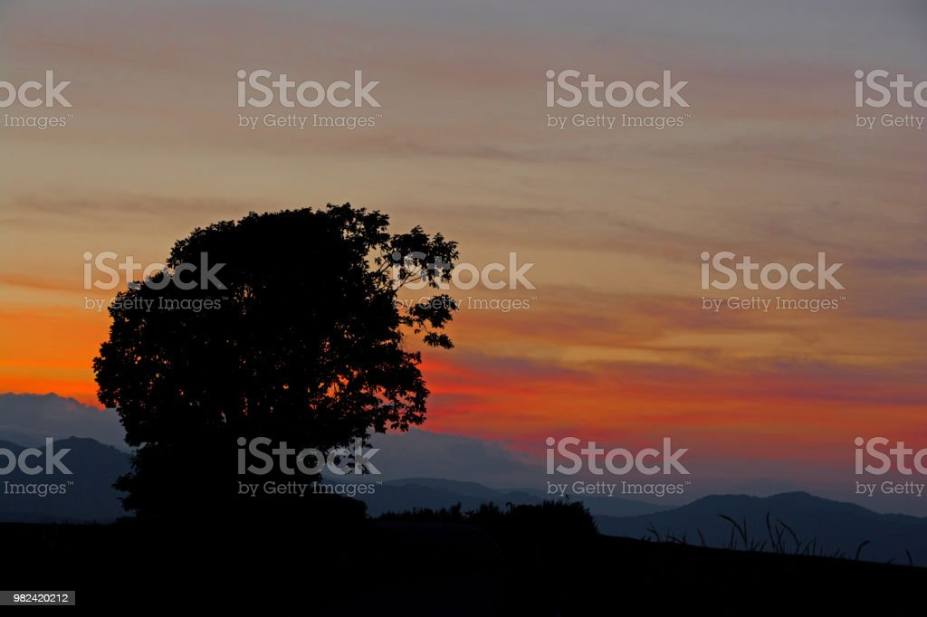 Beautiful evening sky and big tree silhouette in Biei stock photo