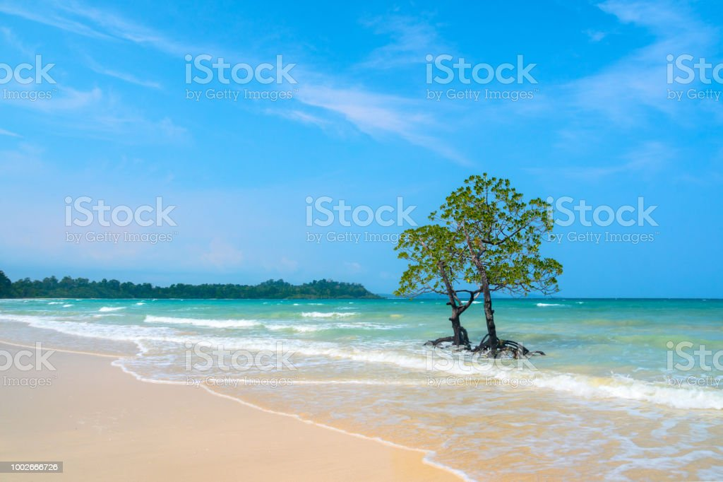 Beautiful exotic trees against the sea landscape with blue clouds stock photo