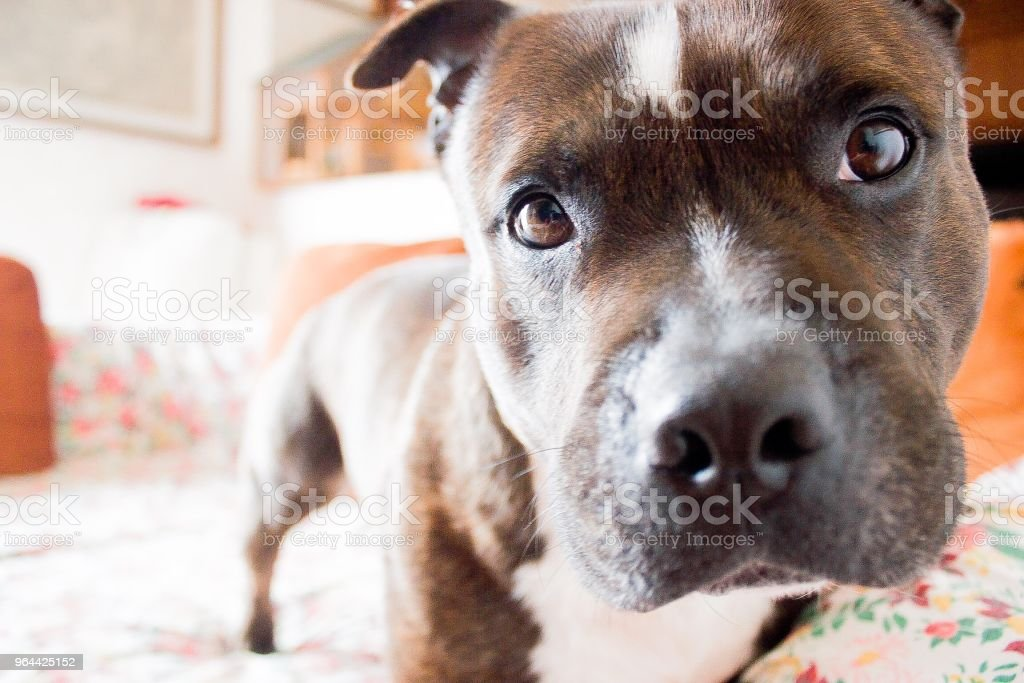 Beautiful eyes full of love - Royalty-free Animal Stock Photo
