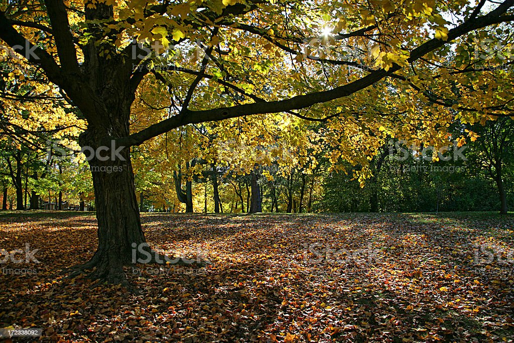 Beautiful Fall Day royalty-free stock photo