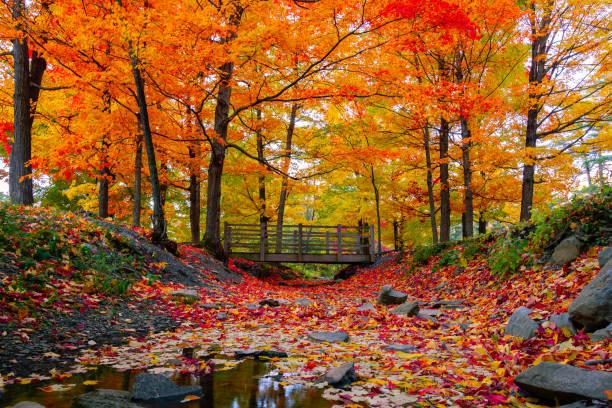 mooie herfst gebladerte in de noordoostelijke verenigde staten - massachusetts stockfoto's en -beelden