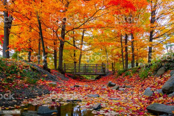 Photo of Beautiful fall foliage in the northeast USA