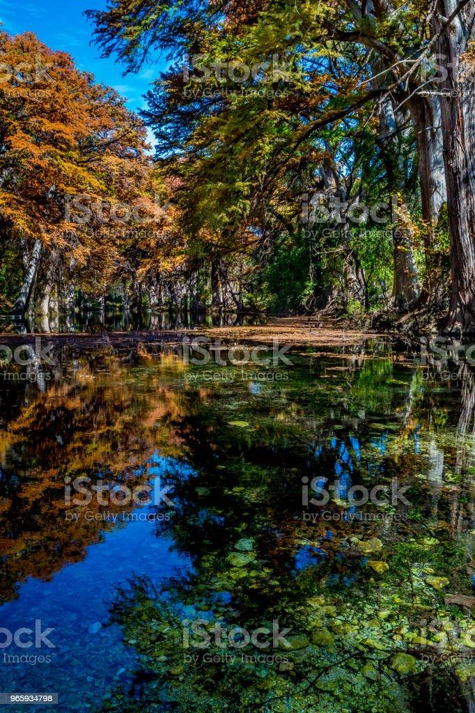 Beautiful Fall Foliage on the Frio River, Texas. Beautiful Bright Orange Fall Foliage Surrounding the Clear Frio River near Leaky, Texas. Autumn Stock Photo