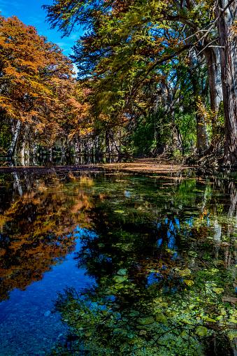 Mooie Fall Gebladerte Op De Frio Rivier Texas Stockfoto en meer beelden van Beschermd natuurgebied