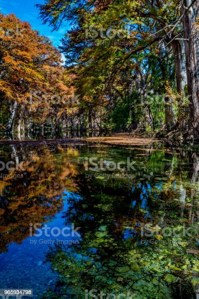Beautiful Fall Foliage On The Frio River Texas Stock Photo - Download Image Now