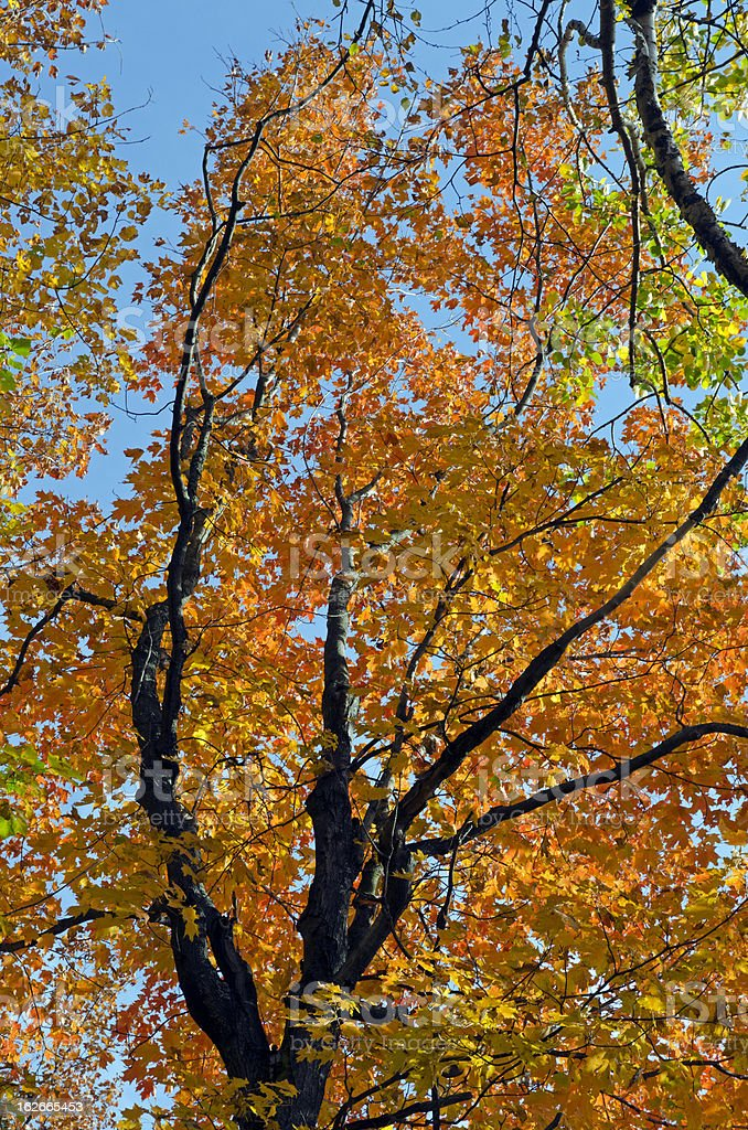 Beautiful fall forest royalty-free stock photo