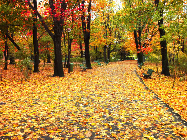 Beautiful Fall leaves on meadow in autumn stock photo
