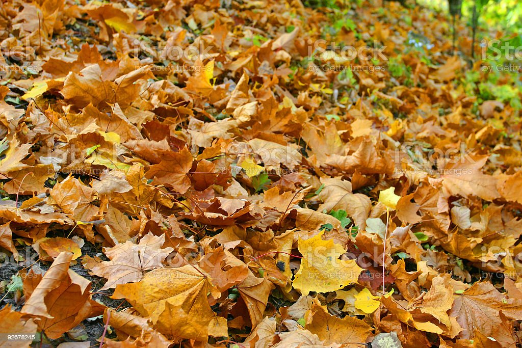 Beautiful Fall leaves royalty-free stock photo