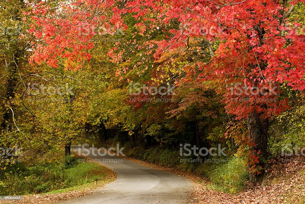 Beautiful Fall Trees with Curving Road royalty-free stock photo
