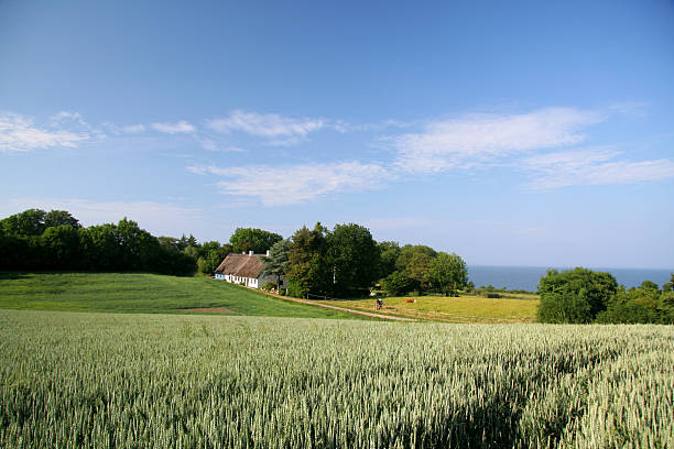 beautiful farmland, old house and sea in southern jutland, denmark - denmark stock photos and pictures
