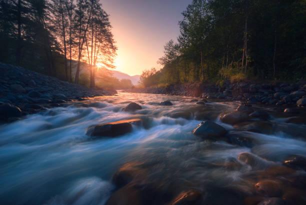 schöner schneller fluss im bergwald bei sonnenaufgang - bach stock-fotos und bilder
