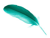 Beautiful feather color green turquoise isolated on white background