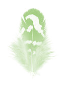 Beautiful feather color light green isolated on white background