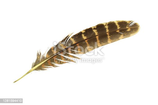 istock Beautiful feather isolated on white background 1281594410