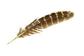 Beautiful feather isolated on white background