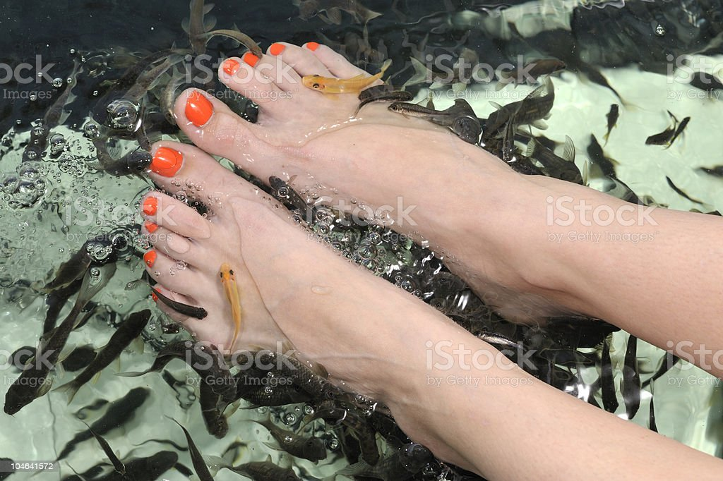 beautiful feet - enjoying fish spa stock photo