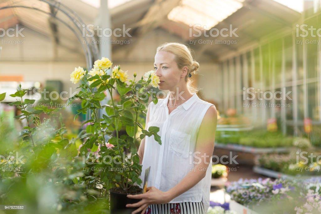 Schöne weibliche Kunden halten und riechen blühende gelbe Topfrosen im Gewächshaus. – Foto