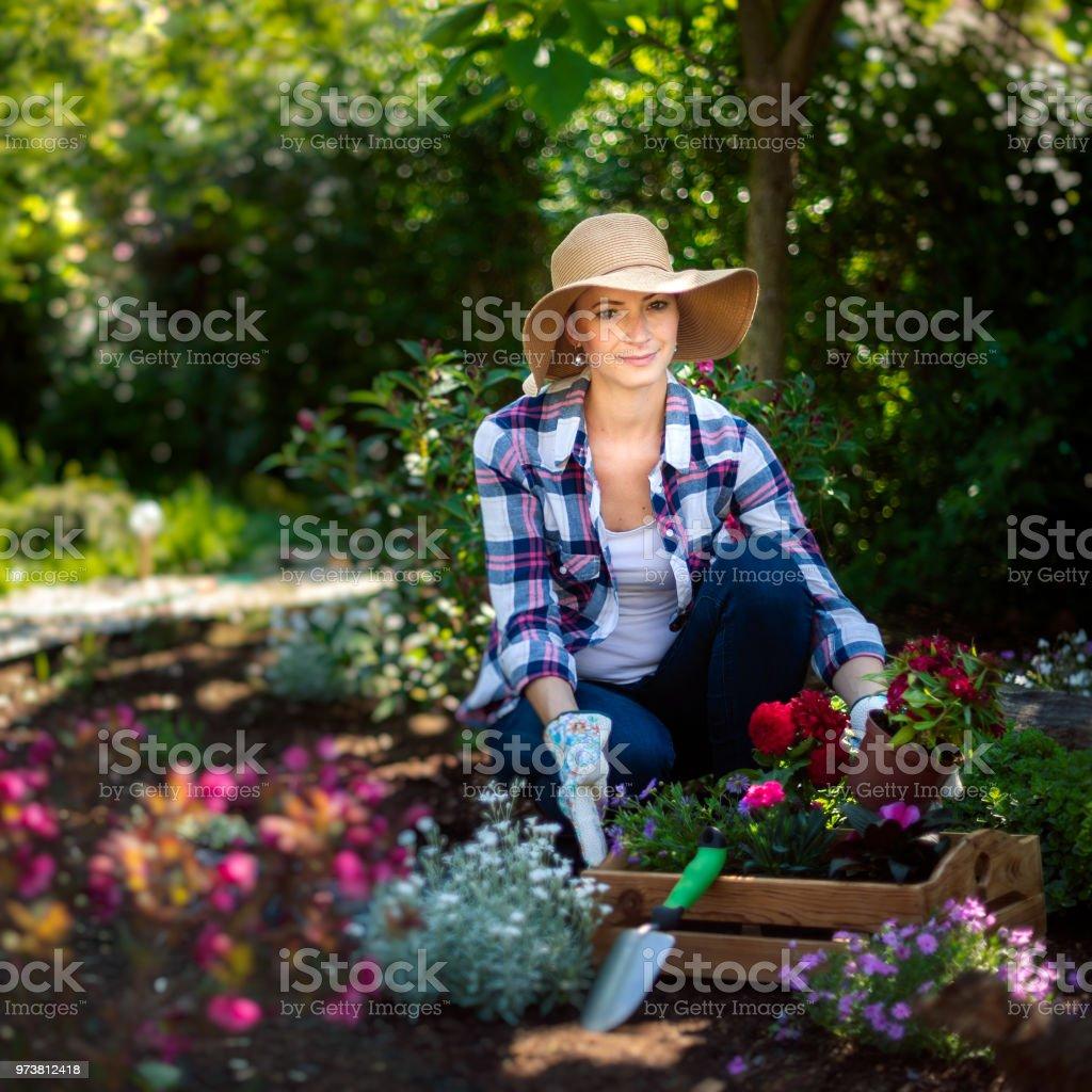 Planter Dans Une Caisse En Bois photo libre de droit de belle femelle jardinier regardant la