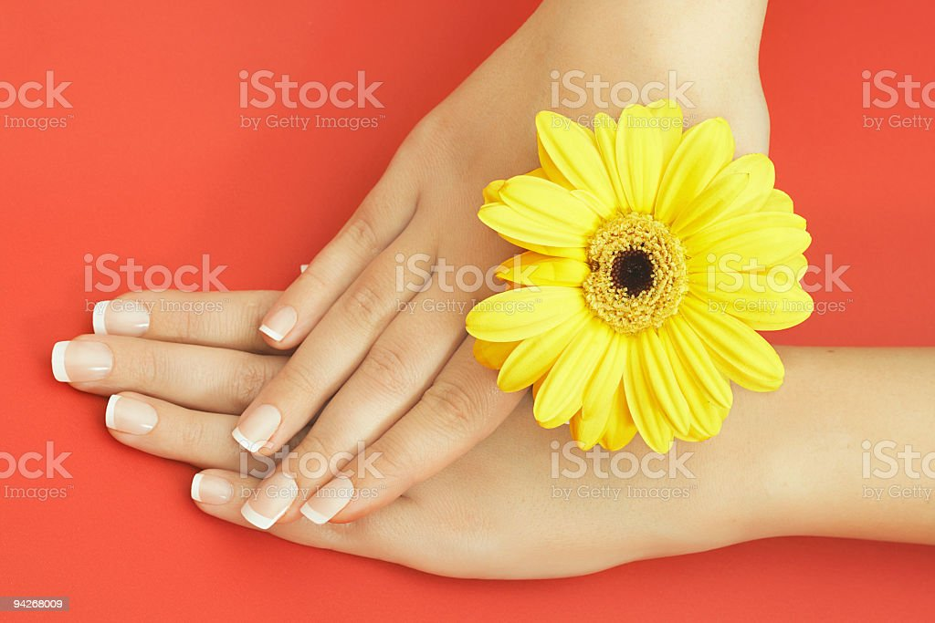 Beautiful female hands with flower over red background royalty-free stock photo
