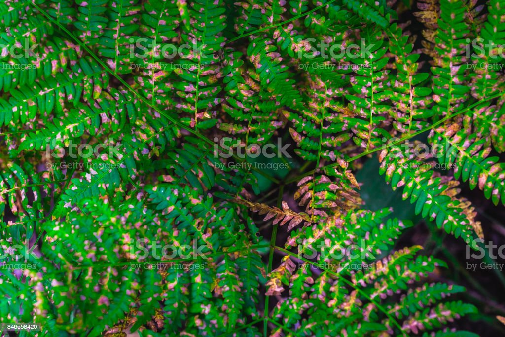 Beautiful ferns leaves green leaves natural floral fern background in sunlight. stock photo