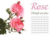 istock Beautiful festive greeting card with pink roses isolated 523536603