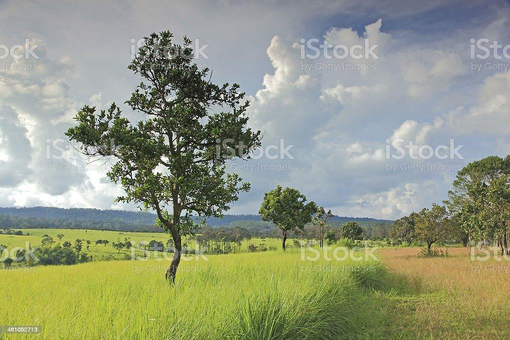 Beautiful field at Thung Salang Luang royalty-free stock photo