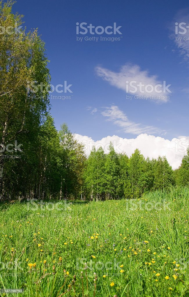 Beautiful field, forest and sky royalty-free stock photo