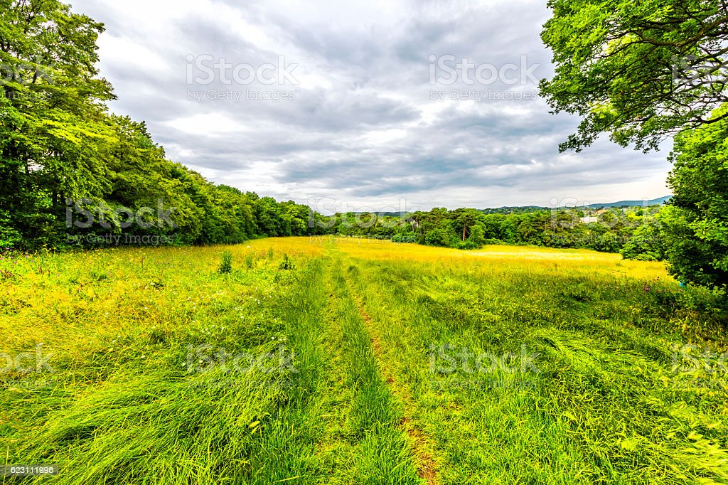 Beautiful field  in Wienerwald near Vienna, Austria stock photo