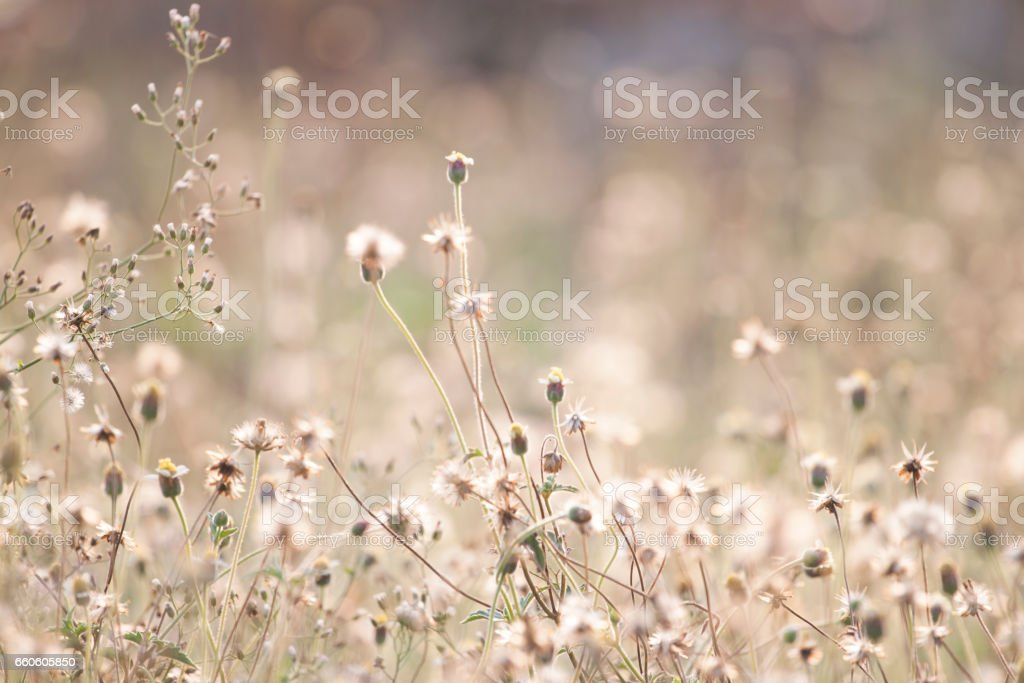 Beautiful field with daisie royalty-free stock photo