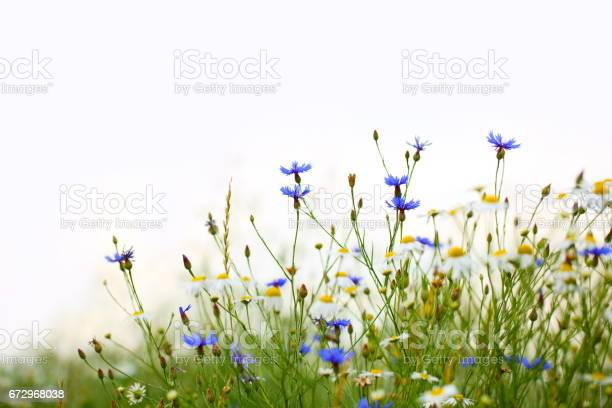 Photo of Beautiful Field with Flowers