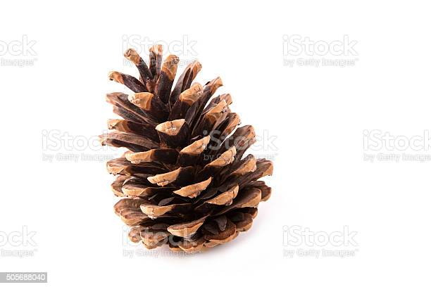 Photo of beautiful fir-cone isolated