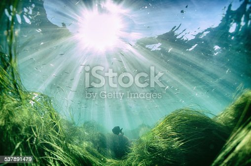 A fish in the pacific ocean with a large sun beam shining through.