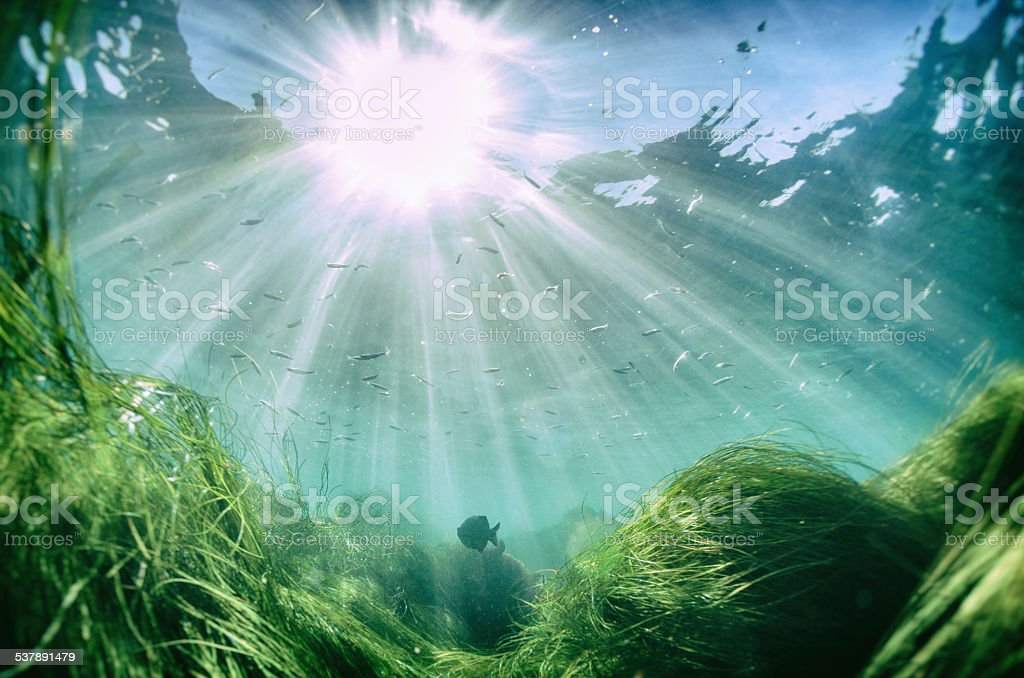 Beautiful fish under the sea with sun beam from the surface stock photo