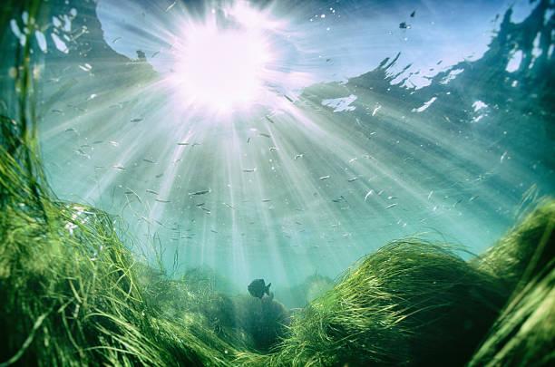 Hermosos peces en el mar con rayo de sol de la superficie - foto de stock