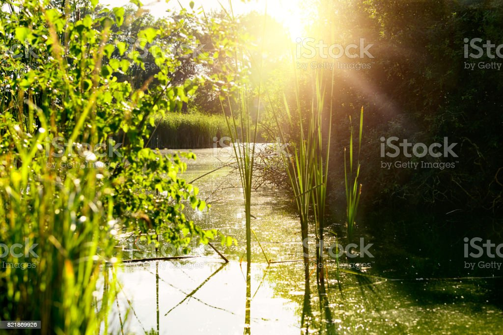 Beautiful fishpond in golden sun, tranquil landscape stock photo