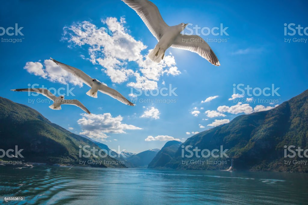 Beautiful fjords near the Flam in Norway stock photo