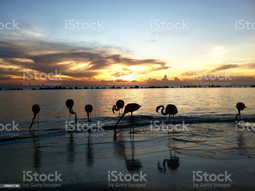 beautiful Flamingos on a paradise Beach stock photo
