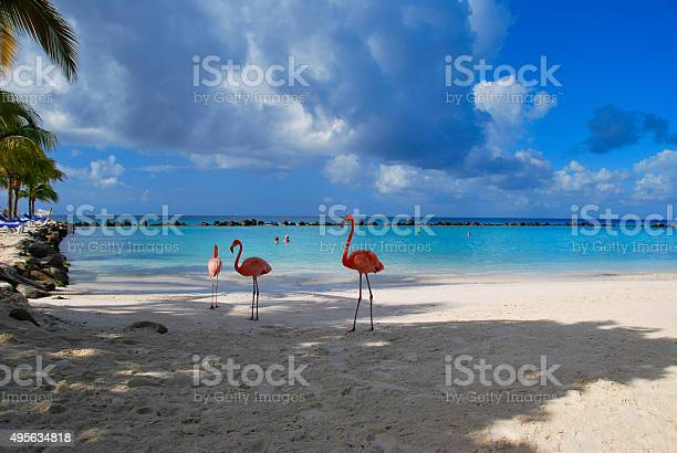 Beautiful flamingos on a paradise beach picture id495634818?b=1&k=6&m=495634818&s=612x612&h=cn rfb9szsuhr 4zxwyy0cwxil11sbg7fkksjzz3lv4=