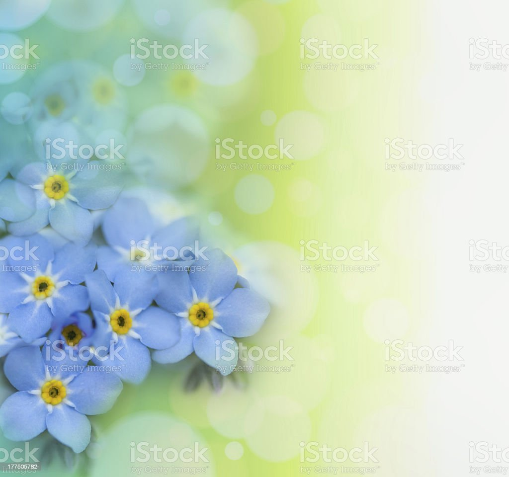 Beautiful Floral background royalty-free stock photo
