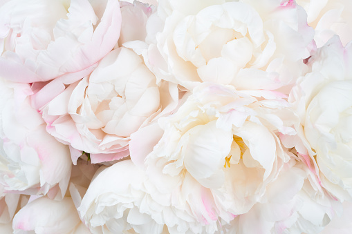 istock Beautiful floral background 537803510