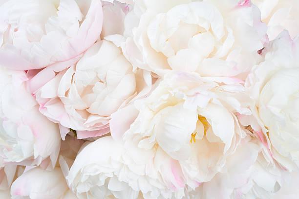 Lindo floral fundo  - foto de acervo