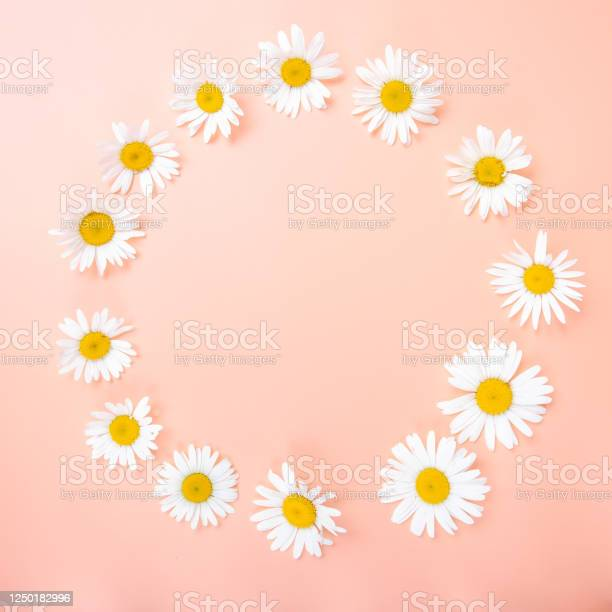 Beautiful floral composition with chamomile flowers wallpaper card picture id1250182996?b=1&k=6&m=1250182996&s=612x612&h=4imnfugmroeofazbeyto c1daelommkarvyy0qcrsak=